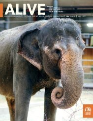 Download ALIVE, the Membership Newsletter - May ... - Denver Zoo