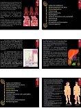 Die Gefäße des menschlichen Körpers - Page 2