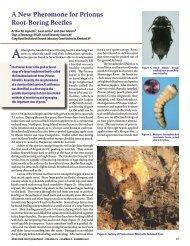 3.A New Pheromone for Prionus Root-Boring Beetles