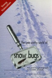1653 Wee Wintry World of Snow Bugs The - webapps8