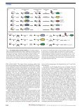 Evolution and function of ubiquitin-like protein-conjugation systems - Page 2