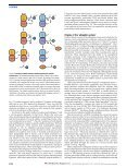 Evolution and function of ubiquitin-like protein-conjugation systems - Page 4