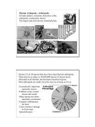 Animal Diversity 4-2.pdf