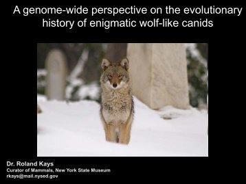A genome-wide perspective on the evolutionary history of enigmatic ...