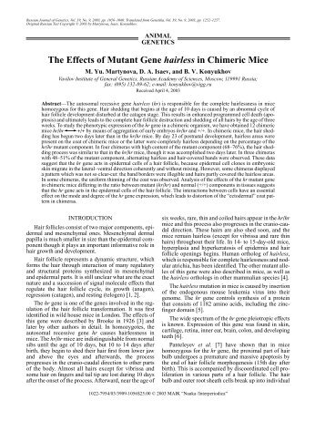 The Effects of Mutant Gene hairless in Chimeric Mice
