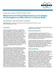AP0122 - Measurement of Antiviral Responses by in vivo - Bruker