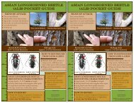 asian longhorned beetle (alb) pocket guide asian longhorned beetle