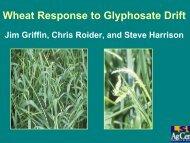 Wheat Response to Glyphosate Drift