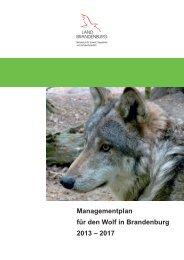 Managementplan für den Wolf in Brandenburg 2013 – 2017