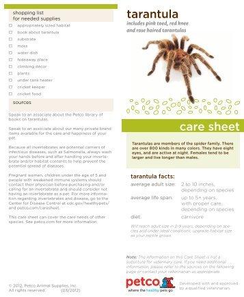 tarantula care sheet - Petco