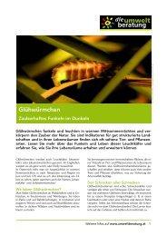 Glühwürmchen - Das zauberhafte Funkeln im Dunkeln