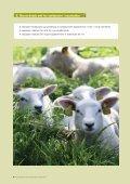 vanlig PDF-fil - Norsk Sau og Geit - Page 6