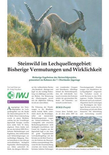 Steinwild im Lechquellengebiet - Vorarlberger Jägerschaft