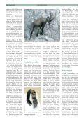 Steinwild im Lechquellengebiet - Vorarlberger Jägerschaft - Page 2