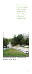 Dam Owner's Guide To Plant Impact on Earthen Dams - Federal ... - Page 5