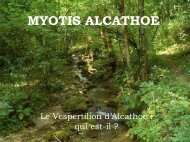 MYOTIS ALCATHOE - natagora.org