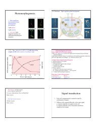 Photomorphogenesis Signal transduction
