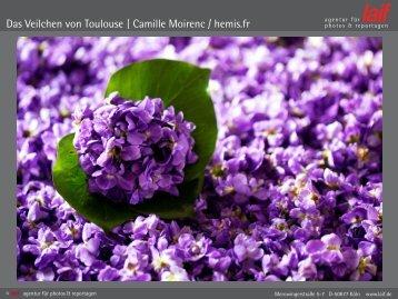 Das Veilchen von Toulouse | Camille Moirenc / hemis.fr