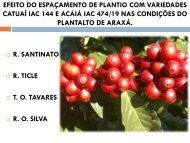 efeito do espaçamento de plantio com variedades catuaí iac 144 e ...