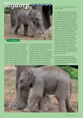 vn3_10:Opmaak 1.qxd - Vrienden van Blijdorp - Page 5