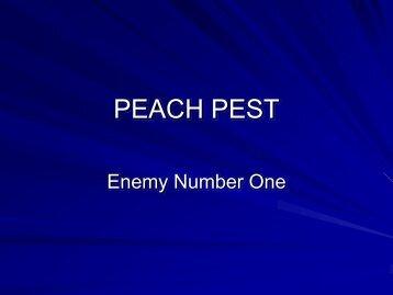 PEACH IPM