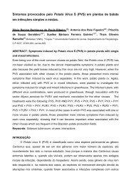 Sintomas provocados pelo Potato Virus S (PVS) em plantas de ...