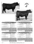Glover - National Cattle Services, Inc. - Page 6