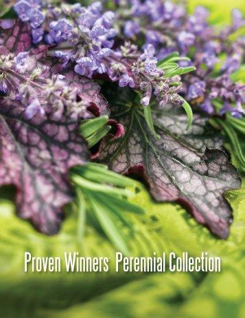Perennials - Proven Winners