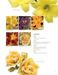 Perennials - Proven Winners - Page 7