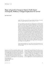Shape and growth in European Atlantic Patella limpets (Gastropoda ...