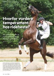 Hvorfor vurdere temperament hos rideheste? - Dansk Varmblod