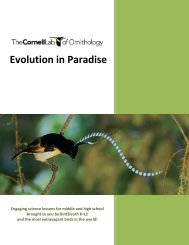 Bird of Paradise Lessons - About Birds
