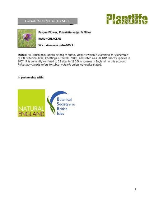 Pulsatilla vulgaris (L.) Mill. - Plantlife