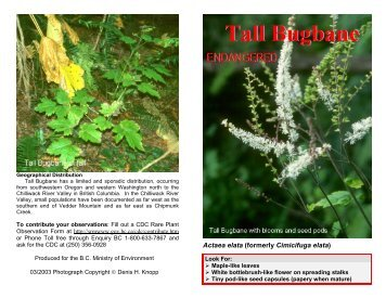 Tall Bugbane brochure Ministry of Environment Lower Mainland