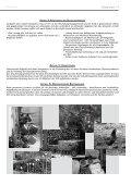 Brasilianische Eurythmie - Freie Waldorfschule Schopfheim - Seite 7