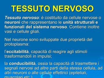 Tessuto nervoso e muscolare