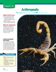 Chapter 28: Arthropods
