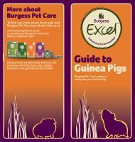Guide to Guinea Pigs - Burgess Pet Care