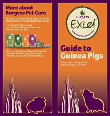 Guide to Guinea Pigs - Burgess Pet Care