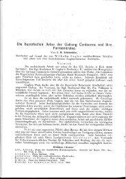 Die bayerischen Arten der Gattung Centaurea und ihre