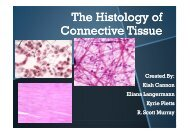 The Histology of Connective Tissue - Sinoe medical homepage.