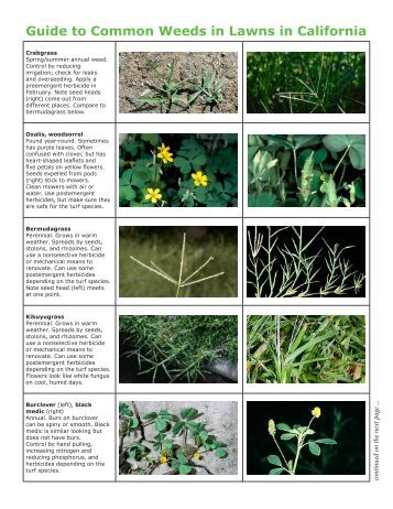 Guide to Common Weeds in Lawns in California
