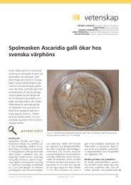 Svensk Veterinärtidning nr 8-9, 2011 (pdf). - SVA