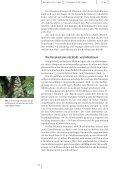 PDF-File (322 KB) - Basler Botanische Gesellschaft - Universität Basel - Page 2