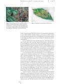 PDF-File (322 KB) - Basler Botanische Gesellschaft - Universität Basel - Page 4