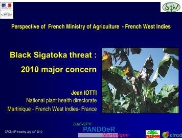 Black Sigatoka threat : 2010 major concern - CEDAF