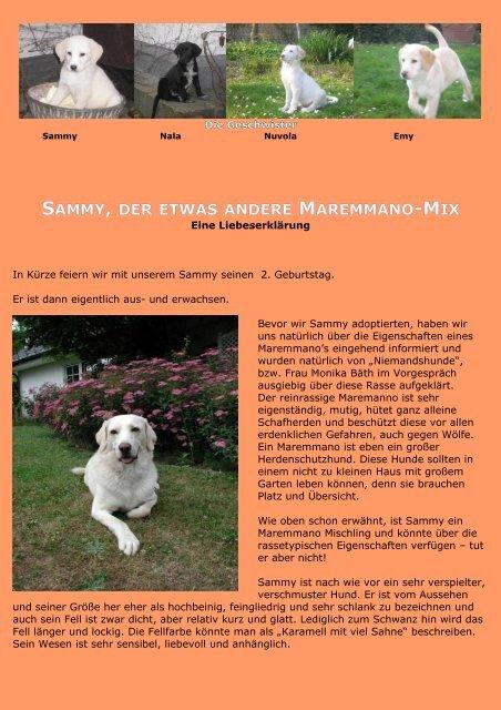 Sammy, der etwas andere Maremmano-Mix - NiemandsHunde