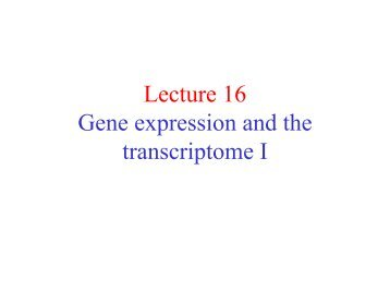 Lecture 16 Gene expression and the transcriptome I