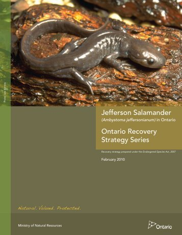 Jefferson Salamander - Amphibian Specialist Group