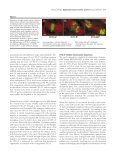 The schedule of destruction of three mitotic cyclins can dictate the ... - Page 3